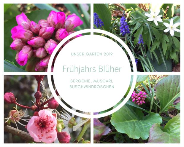 Frühjahrs Blüher-2